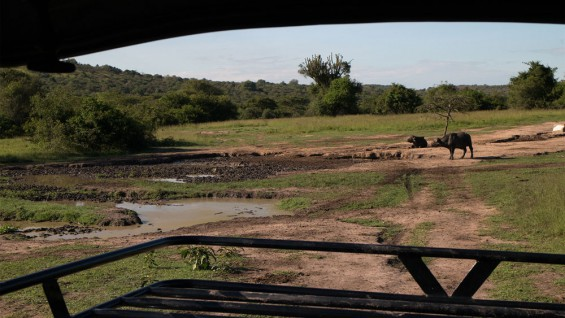 The Area around Mburo Safari Lodge