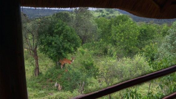 See the wildlife from your balcony